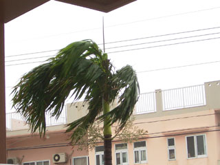 風で揺れる木