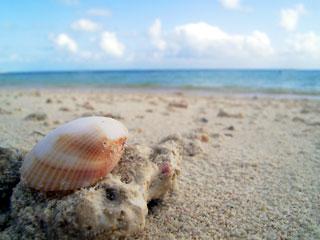 貝の視線で海を見る