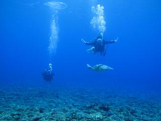 カメさんと泳ぐ
