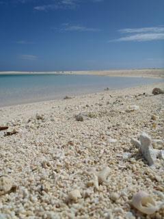 貝殻とサンゴ