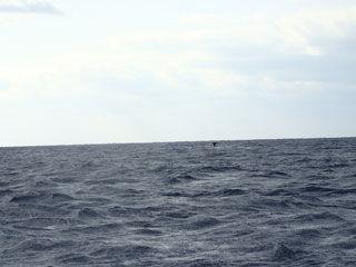 クジラテール