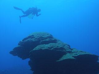 戸田さんとフカアナハマサンゴ