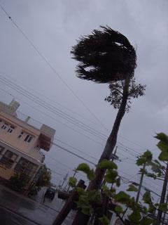 強風パワーアップ