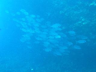 バラバラギンガメ