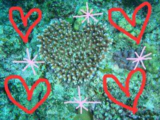 ハート型サンゴ2