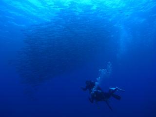 ギンガメ背景