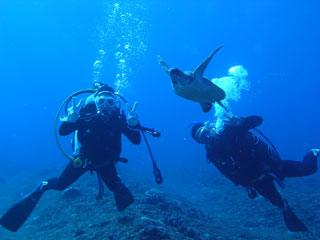 アオウミガメと一緒