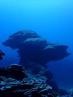 フカアナハマサンゴ