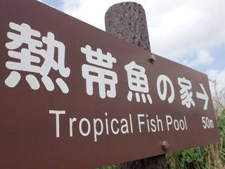 Tropical-Fish-Pool