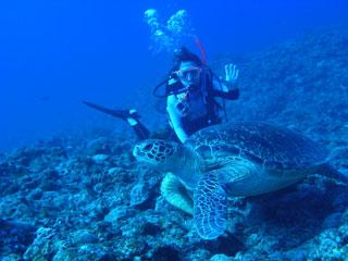 アオウミガメとKちゃん