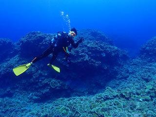 サンゴと一緒に