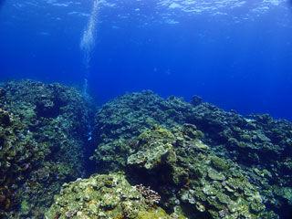 サンゴの根の隙間