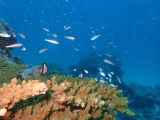 砂地の魚たち