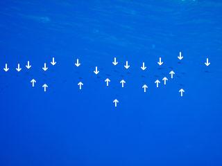 イカの集団