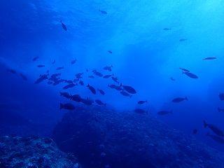 トンバラ魚影