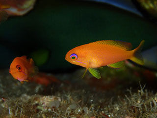 幼魚の季節