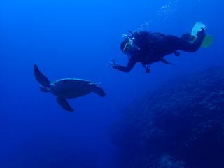 アオウミガメとCさん