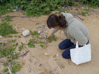 浜ほうれん草発見