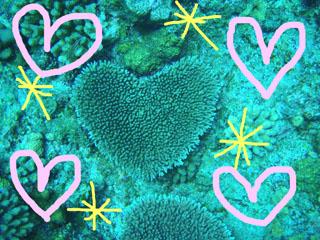 ハート型サンゴ1