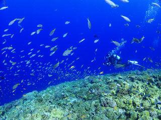 魚の奥にダイバー