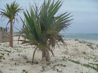 砂で埋まる木