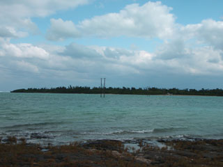 水中に立つ電柱