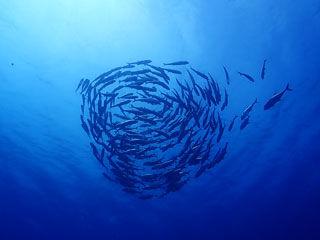 ギンガメの渦